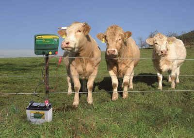 example-electric-cattle-fence-smallwm